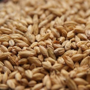 Mashing: cereal vs. malt